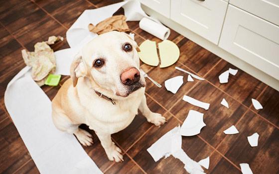 Guía básica del adiestramiento de perros