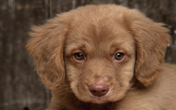 Curso online en Psicología, Educación y Adiestramiento Canino