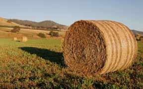 Curso online de Técnico en Energía de la Biomasa