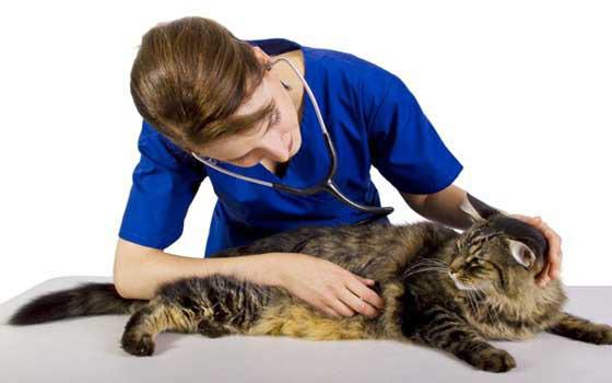Curso online de Auxiliar en Veterinaria