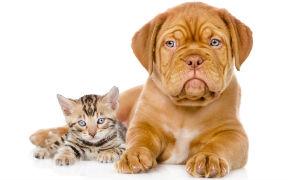 Curso a distancia de Alimentación Saludable en Caninos y Felinos