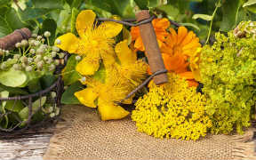 Curso en línea (Online) de Plantas Medicinales
