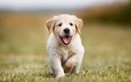 Curso online de Psicología Canina y Felina