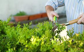 Curso a distancia (Online) de Jardinería